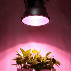 IP67 Waterproof 600w LED COB high power LED grow light full spectrum for Farm