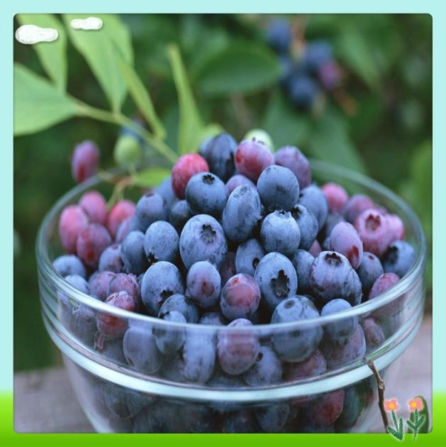 Bilberry Fruit Extract 2