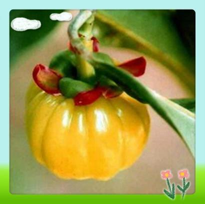 Garcinia Cambogia Fruit Extract 1