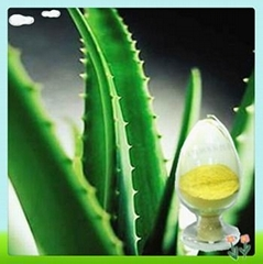 Natural Aloe Vera Extract