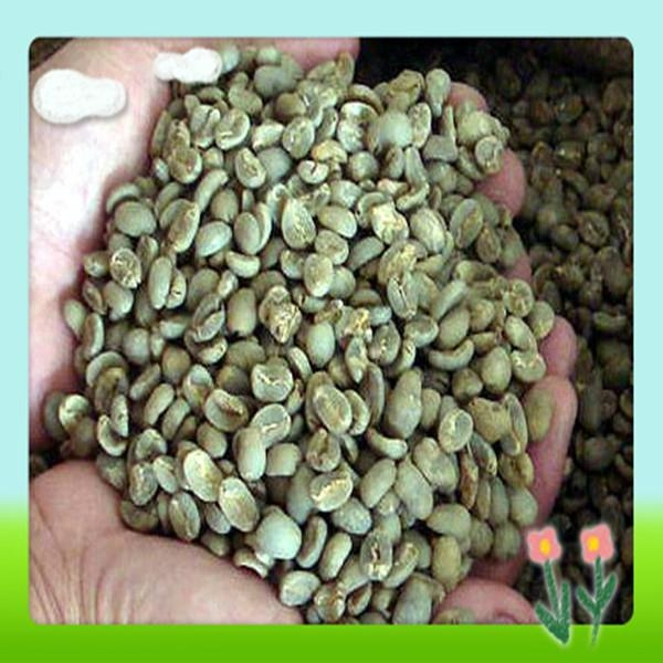 High Quality Green Coffee Bean Extract 3