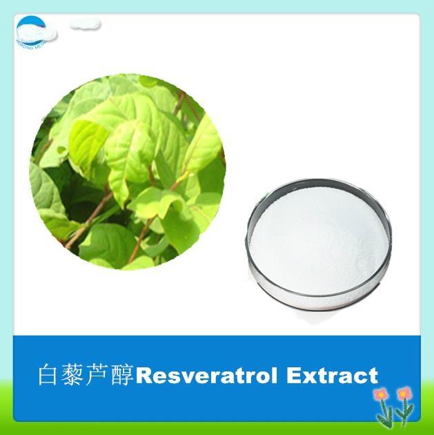 Hot Sale Polygonum Cuspidatum Resveratrol Extract 1