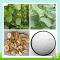 Hot Sale Polygonum Cuspidatum Resveratrol Extract 4