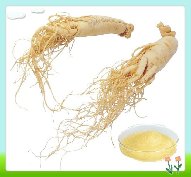 Natural Panax Ginseng Root Extract 1