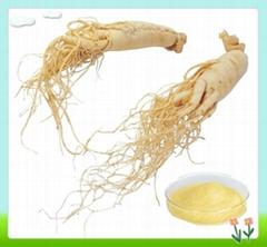 Natural Panax Ginseng Root Extract