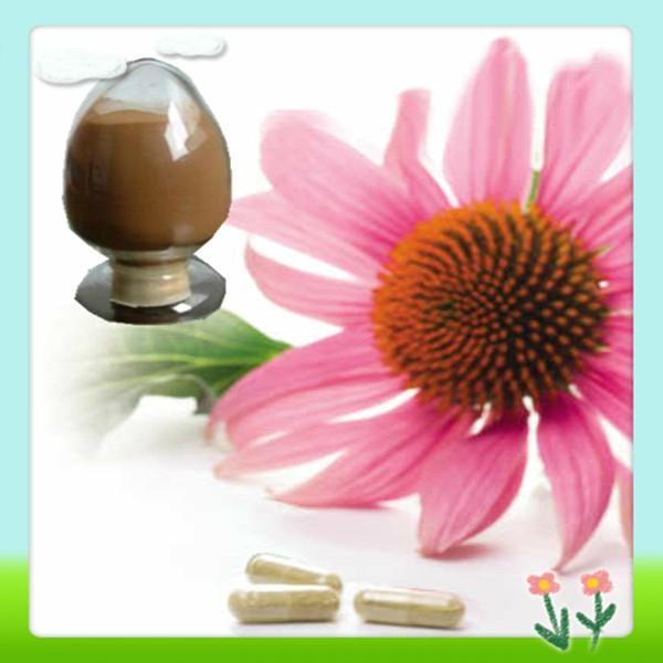 Top Quality Echinacea Pallida Extract 1