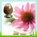 Top Quality Echinacea Pallida Extract