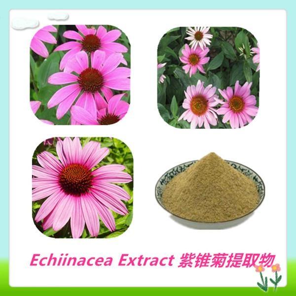 Top Quality Echinacea Pallida Extract 5
