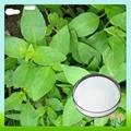Lycopodium Serratum Extract Huperzine a 2