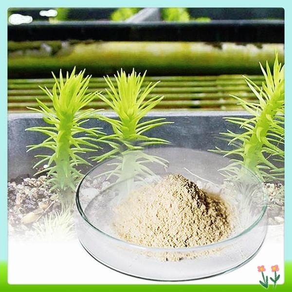 Lycopodium Serratum Extract Huperzine a 3