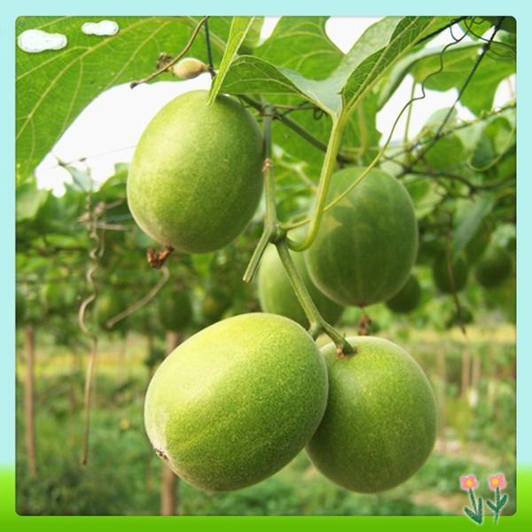 High Qulitiy Luo Han Guo Extract (Mogroside V 25%30%40%) 1