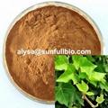 Ivy Extract