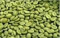 green coffee bean extract (chlorogenic acid)  2