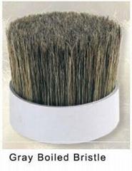 Grey boiled bristle