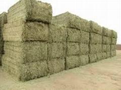 Quality Alfalfa Hay