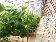 Transparent Agriculture Film for Cucumber