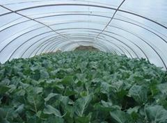 Anti-UV Anti-Drip Greenhouse Film