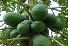 Pure Natural Green Papaya Powder