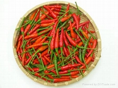 Vietnamese Chilli new crop and best price ever