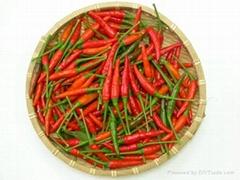 Vietnamese Chilli new cr