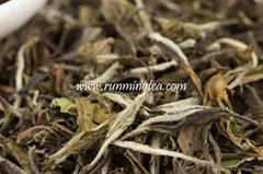 Spring Old Tree Imperial White Moon Light Jinggu Tea (Tested, EU STANDARD )