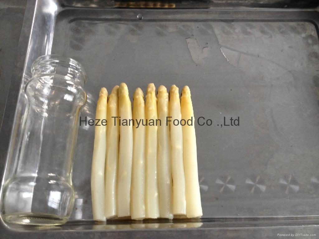 白蘆筍罐頭370ml/16cm 5