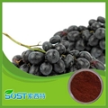 100%Natural grape seed extract proanthocyanidins 95% 1