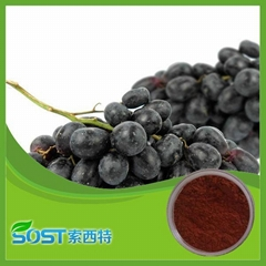 100%Natural grape seed extract proanthocyanidins 95%