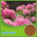 Natural Pure Cosmetic Rhodiola Rosea