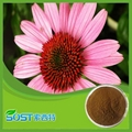 100%Natural And High Quality Echinacea