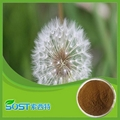 Hot Selling Herbal Medicine Dandelion