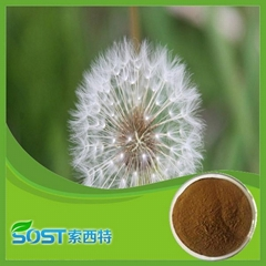 Hot Selling Herbal Medicine Dandelion Powder Extract