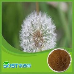 Hot Selling Herbal Medicine Dandelion Powder Extract