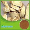 high quality astragalus membranaceus
