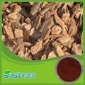 Pure naturtal pine bark extract powder