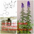 Lappaconite Hydrobromide 98% by
