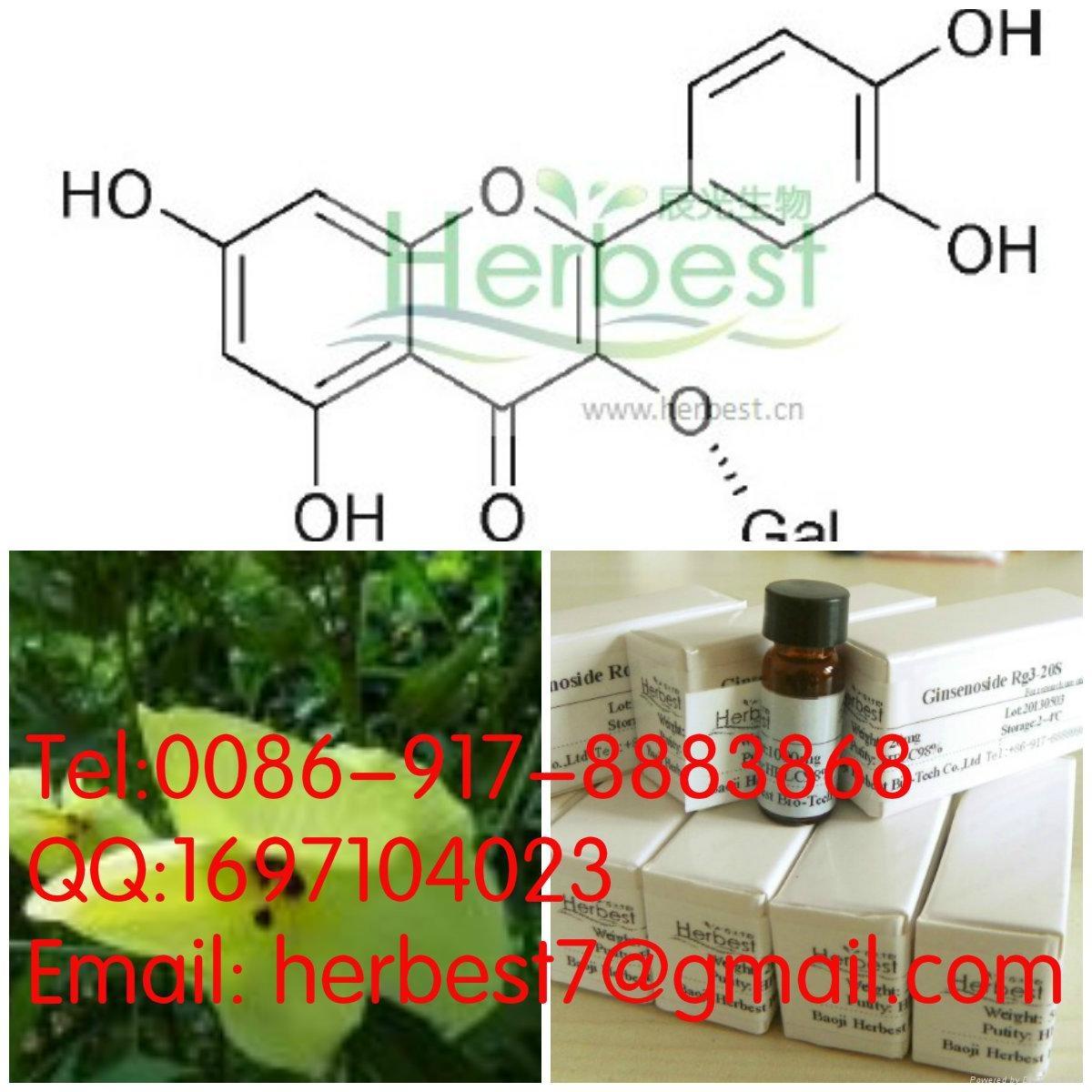 Hyperoside482-36-0 1