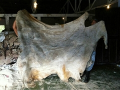 Animal Hides Skin-Animal Extracts