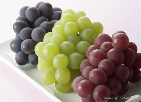 Supply antioxidant product pf Grape Seed Extract 1