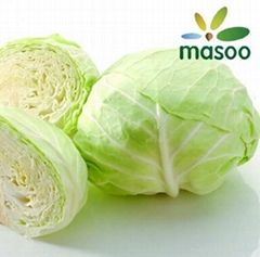 Cabbage from Hebei (China) (Wholesale)