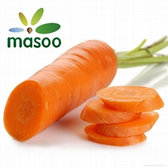 Carrot from Shandong (China) (Wholesale)