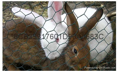 hexagonal wire  netting 3