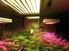 JYO apollo Full Spectrum -brand Hydro LED Grow Light Apo4 60*3-watt