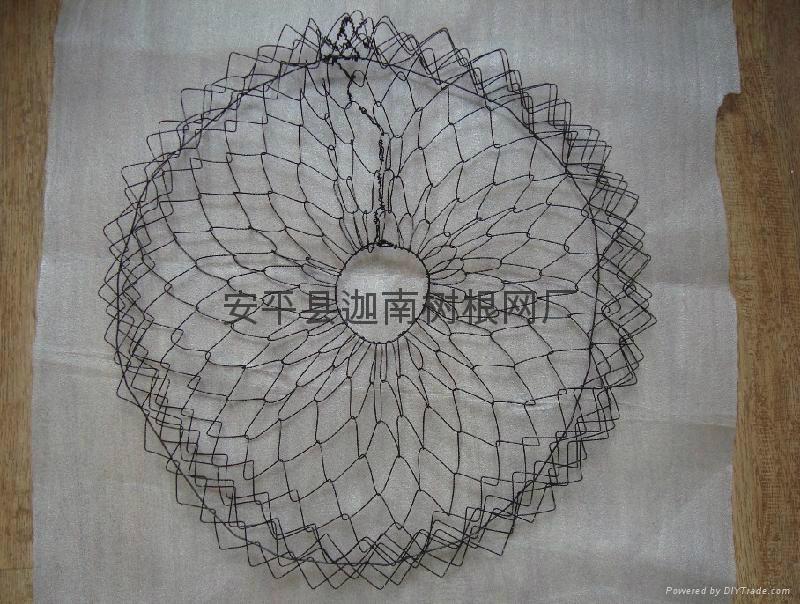 包樹根網 1