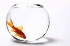 亚克力小型鱼缸