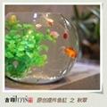 acrylic small fish tank/fish aqurium 3