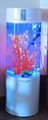 small acrylic cylindrical fish tank/fish