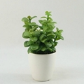 Natural looking Potted artificial plants