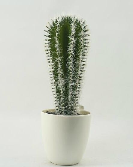 est selling decorative artificial plants cactus bonsai wholesale 1