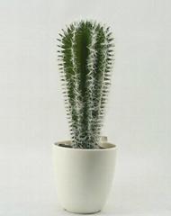 est selling decorative artificial plants cactus bonsai wholesale